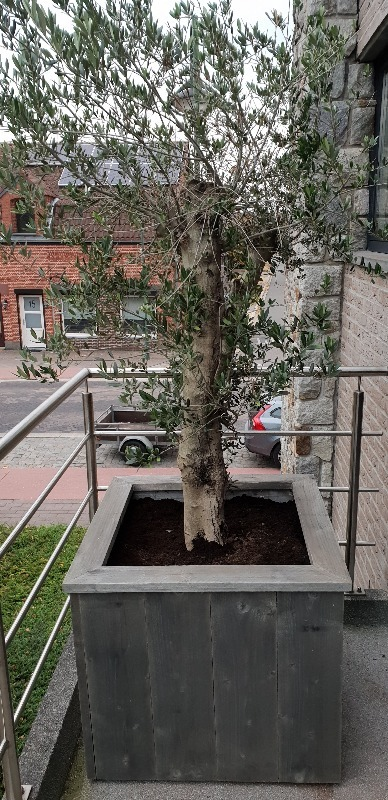 Bloembak steigerhout